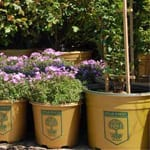 mix sq - Perennials, Evergreen Deciduous Shrubs, Trees For Professionals